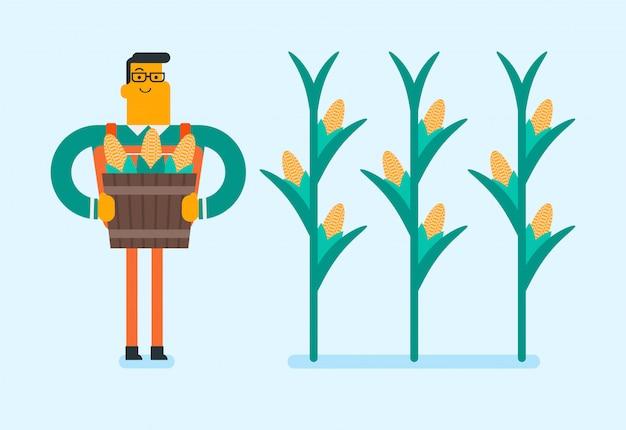 Caucasian white farmer collecting corn crops.