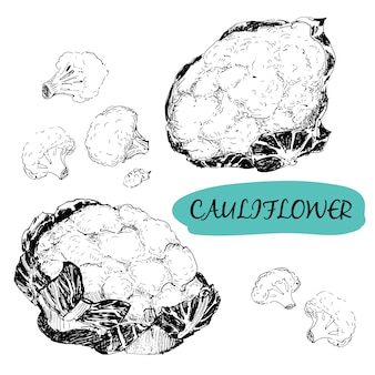 Cauliflower  in engraving style