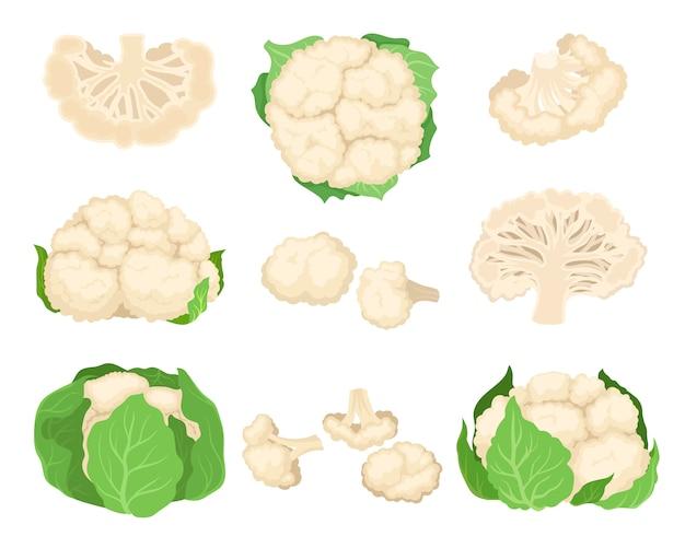 Набор цветной капусты. концепция органических продуктов питания. иллюстрации.
