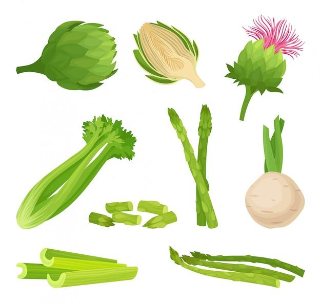 Сельдерей концепция органическая еда и вегетарианство. иллюстрации.