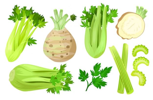 Celery isolated cartoon set icon.   cartoon set icon vegetable.