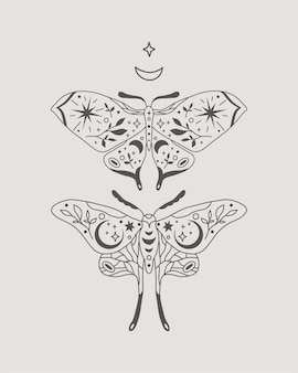 Celestial moths or butterflies in boho style illustration