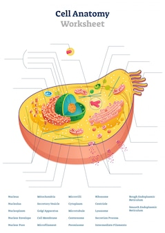 세포 해부학 워크 시트 그림