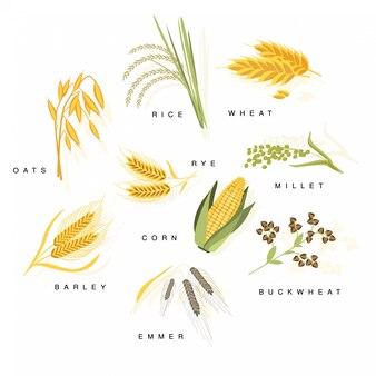 名前が設定された穀物植物