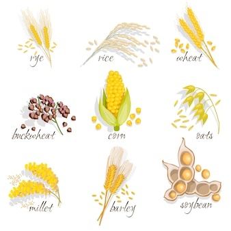 Cereals icon set