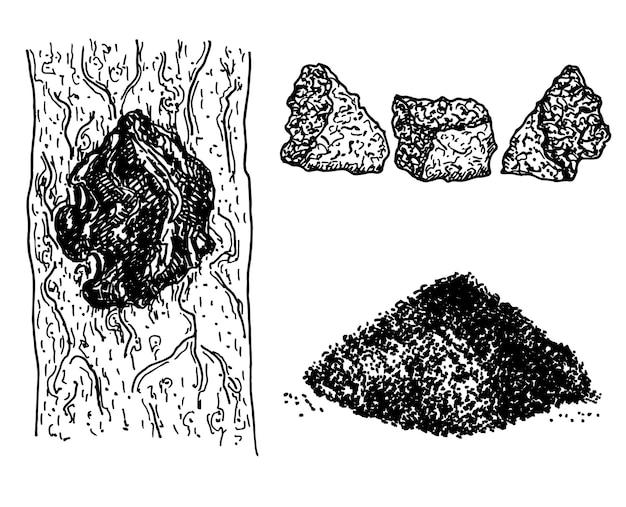 차가버섯 inonotus obliquus 세트. 약용 식물. 천연 차가 버섯 조각 흰색 배경에 고립입니다. 다진 차가버섯 더미를 닫습니다.