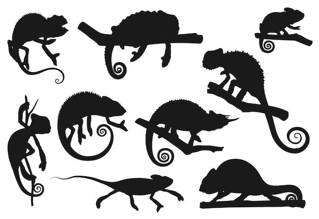 카멜레온 도마뱀, 동물 파충류 실루엣 아이콘, 벡터. 나무 가지, 정글 열대 도마뱀, 이국적인 애완 동물, 동물학 공원 또는 야생 동물 자연에 앉아 위장에 만화 카멜레온 또는 카멜레온