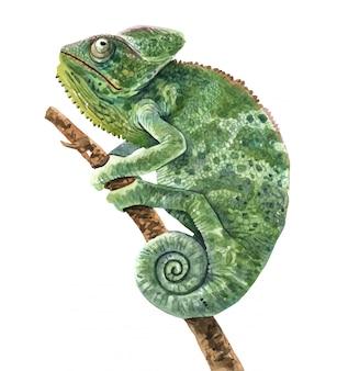 Chameleon watercolor illustration for printing.