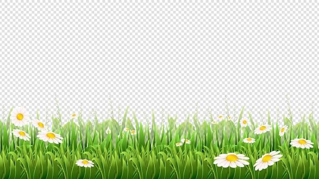 카모마일 필드. 푸른 잔디, 꽃과 허브 테두리.