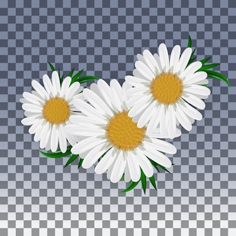 Chamomile flower isolated on transparent . illustration