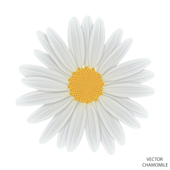 Chamomile flower on white, top view