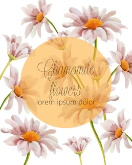 Chamomile flowers card with place for text in a golden filled circle