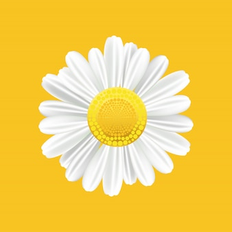 Chamomile realistic symbol. yellow background with isolated chamomile