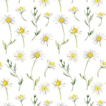 Chamomile seamless pattern in watercolor style floral wallpaper