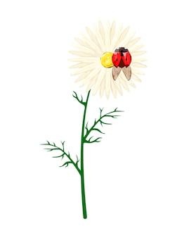 Chamomile with ladybug on a white background