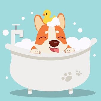 The character cute corgi dog taking a bath with bathtub.it look very happy .