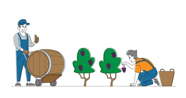 Characters gathering grapes on vineyard plantation