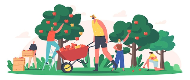庭や果樹園でリンゴを収穫するキャラクター、果物作物を集める庭師、生態学的に健康的な農場生産。季節の仕事、農業、秋の収穫。漫画の人々のベクトル図