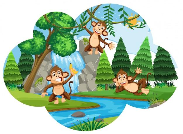 Щековые обезьяны в лесу