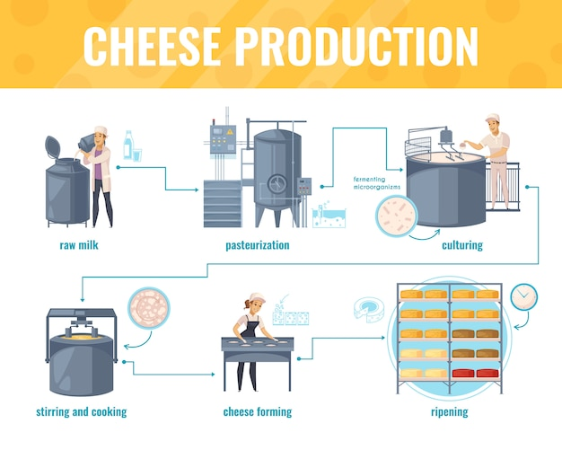 Cheese production infographics