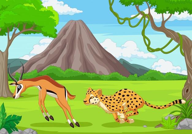 The cheetah is chasing an impala in an african savanna