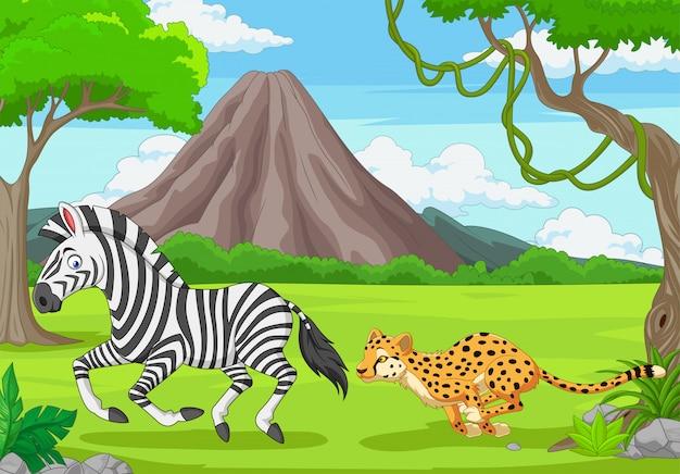 The cheetah is chasing a zebra in an african savanna
