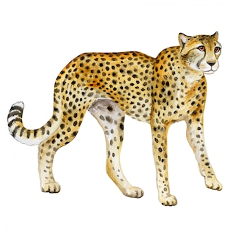 Cheetah. watercolor wild cat