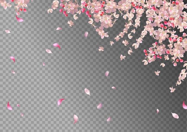 Вишневый цвет и летающие лепестки на весеннем фоне