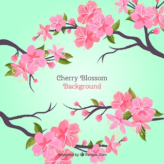 Cherry blossom backgroun in hand drawn style
