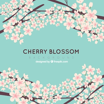 Cherry blossom backgroun in flat style
