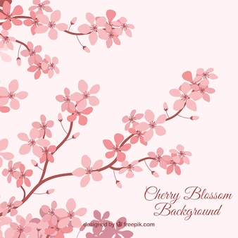 Cherry blossom background in flat style