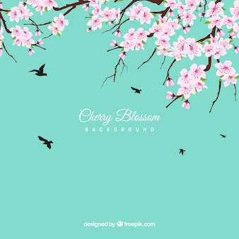 Cherry blossom background in flat design