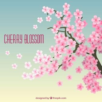 Цвет вишневого цветка в плоском стиле