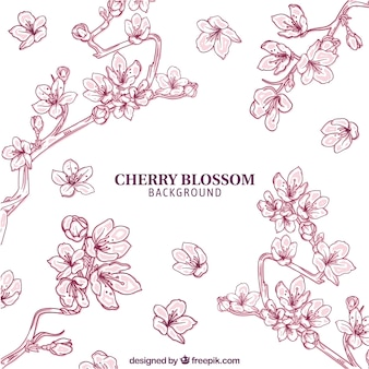 Cherry blossom background in hand drawn style