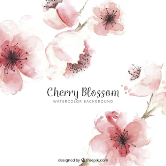 Cherry blossom background in watercolor style