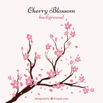 Cherry blossom background in ink style