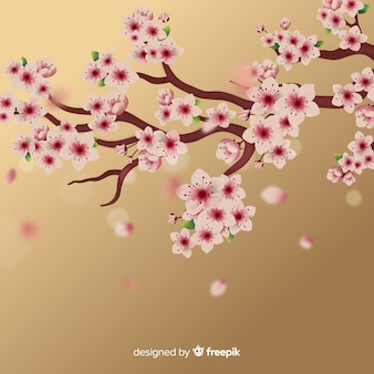 Cherry blossom branch background