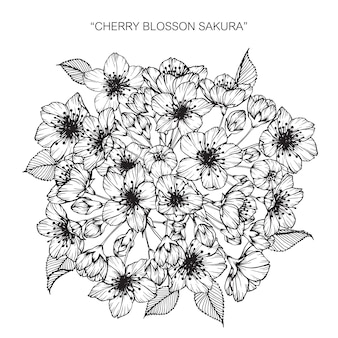 Cherry blossom flower drawing illustration