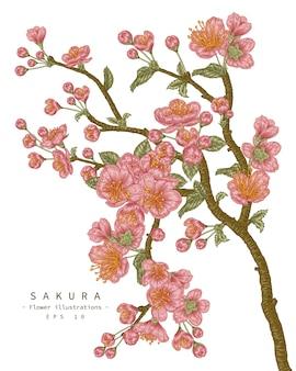 Cherry blossom flower drawings