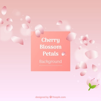 Cherry blossom petals background in gradient style