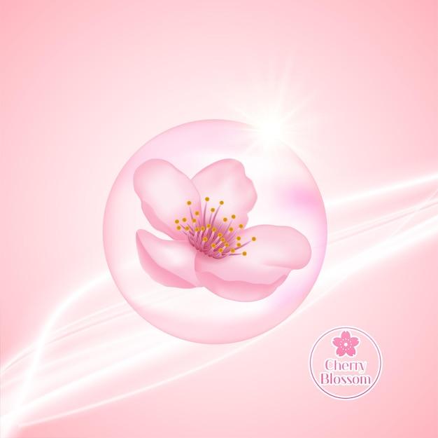 벚꽃, 사쿠라 그림.