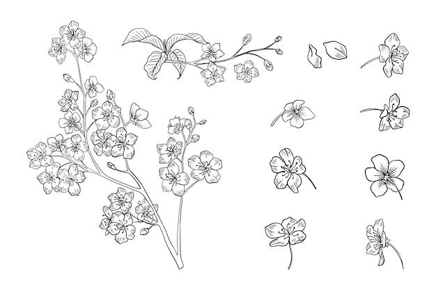 Набор цветущей вишни с ветвью и листьями. набор рисованной