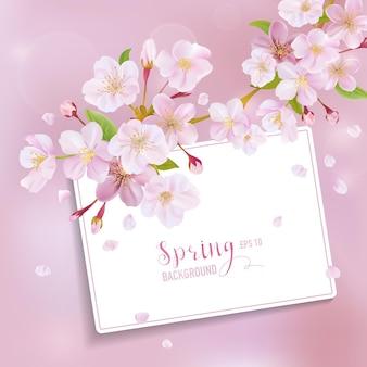 벚꽃 봄 배경