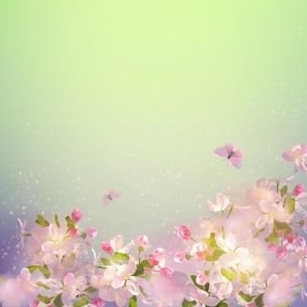 Cherry blossom on spring
