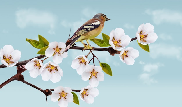 Cherry flowers and bird illustration