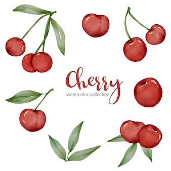 枝のある果物と葉の水彩画コレクションの桜