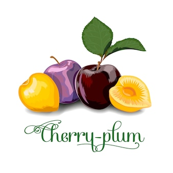 Cherry plum berries