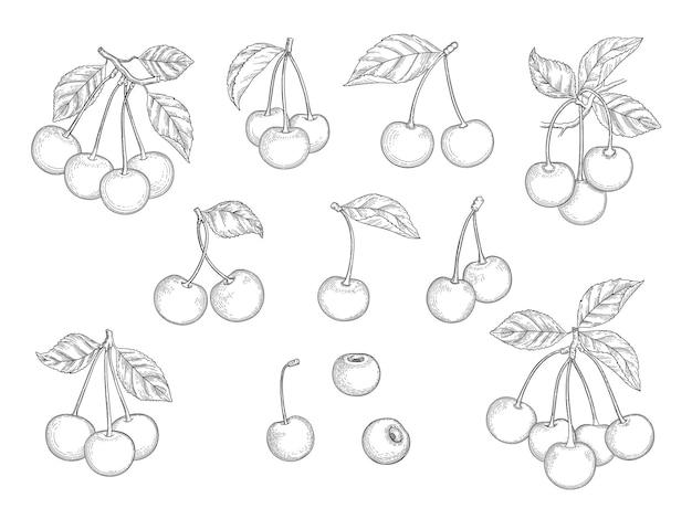 체리 세트입니다. 손으로 그린 천연 건강 과일 벡터 삽화 세트입니다. 달콤한 가지 비타민, 천연 디저트 스케치 과일