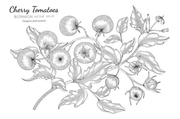 체리 토마토 손을 흰색 배경에 라인 아트와 식물 그림을 그려.