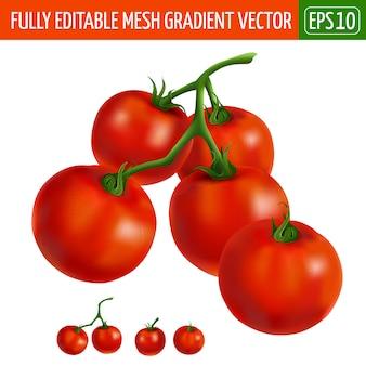 Cherry tomatoes illustration on white
